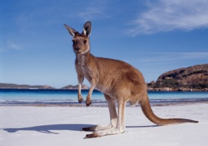 fille au pair australie